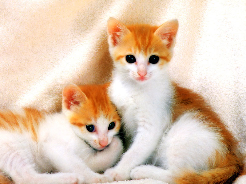 Картинки кошек)